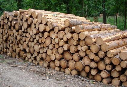 Palivové dřevo kulatina